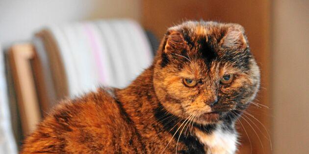 Kattens öde tog priset: Jossan höll på att frysa ihjäl