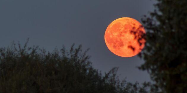 Missa inte blodmånen över Sverige – här ser du den bäst!