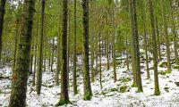Nytt skogsbolag tar form