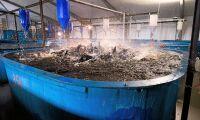 LRF blir delägare i fiskodlingsföretag