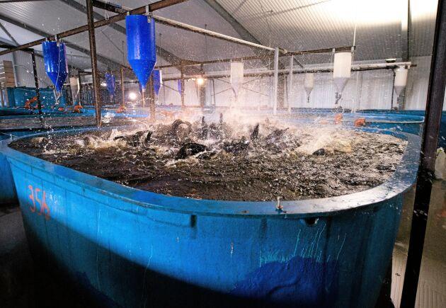LRF blir delägare i fiskodlingsföretaget Gårdsfisk.