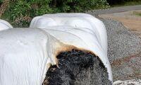 Katastrof i torktider – balar nära att eldas upp