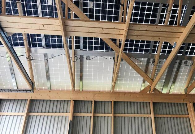 Känsliga saker. Taket i Göran Ramstedts nya tjurstall ska producera knappt 40 000 kilowattimmar per år om allt går som beräknat. Men det håller inte att gå på.