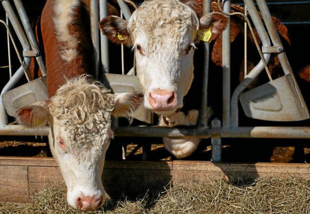 På grund av ökad efterfrågan har de ökat på slakttakten på gården.