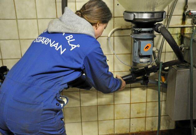 Svenska Blå Stjärnan är redo att rycka in om coronaviruset kräver det. Här en blå stjärna under en praktik på en mjölkgård i Småland.