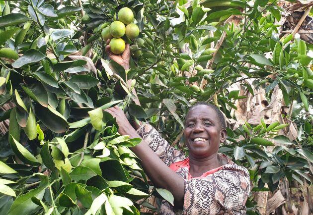 Coronaopandemin har slagit hårt mot personer som Consolata Chikombe. Enligt FN riskerar coronapandemin att leda till en fördubbling av antalet människor som lider av svält. FN:s kvinnoorganisation, UN Women, förutspår att effekterna kommer att vara värre för kvinnor än för män.