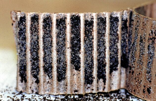 En kvalsterfälla av wellpapp full med kvalster.
