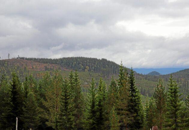 I Norge har frivilligt skydd av skog blivit ett framgångsrecept för att säkra mångfalden i naturen.