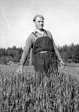 Torparsonen Vilhelm Moberg på sin gård i Grisslehamn år 1947.