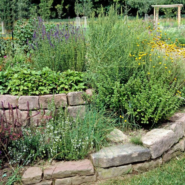 Kryddväxter kan odlas i en spiralodling där varje planta har sin nivå för att trivas bra.