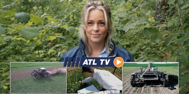 ATL TV: Här rensar roboten ogräs