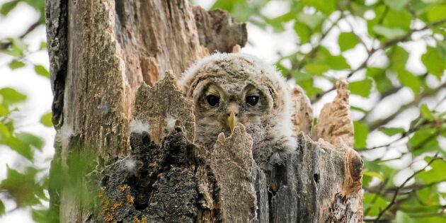 Titta noga – kan du se djuren i skogen?