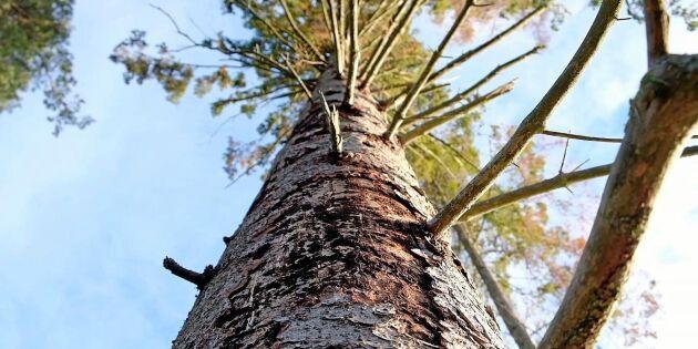 Nya metoder ska stoppa barkborrarna