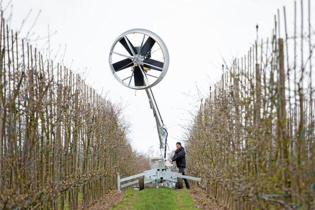 """Markfrost. """"Typiskt i äppelodlingar är att man får frostskador på de nedersta grenarna på träden"""", berättar Anders Ebelin."""
