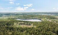 Stora Enso säljer 5000 hektar skog i Halland