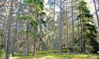 LRF vill ha nya miljömål för skogen