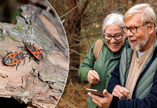 Ta en bild i naturen och skicka frågan vidare till en Facebookgrupp.