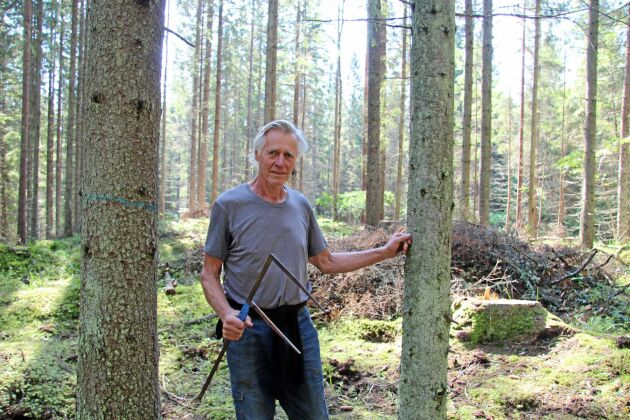Anders Tivell låter den klenare granen växa i ytterligare 30 år. Den grövre räknar han med är mogen att avverka om 10 år då nästa gallring görs. Stubben i bakgrunden var en gran som gallrades bort i november i fjol. I luckorna räknar han med naturlig föryngring.