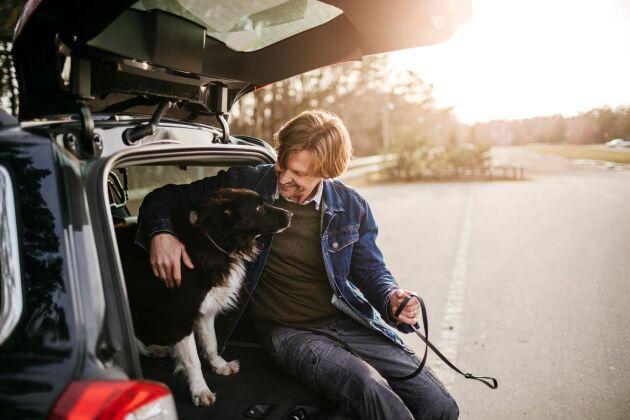 Reser du med hund i bilen? Ha koll på de viktigaste reglerna.