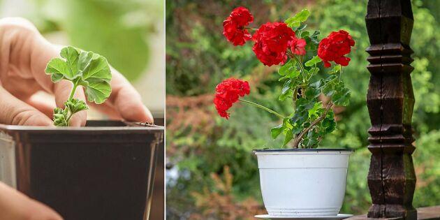 Byt växter, frön och sticklingar – så efterlyser du i Land!
