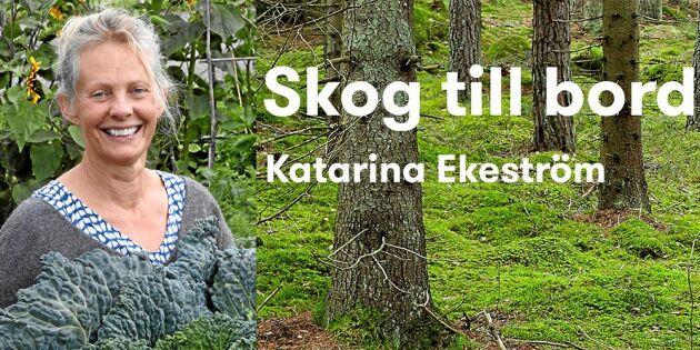 Grattis till nomineringen, Lands matbloggare Katarina Ekeström!