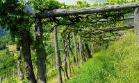Här finns dyraste - och billigaste – odlingsmarken i EU