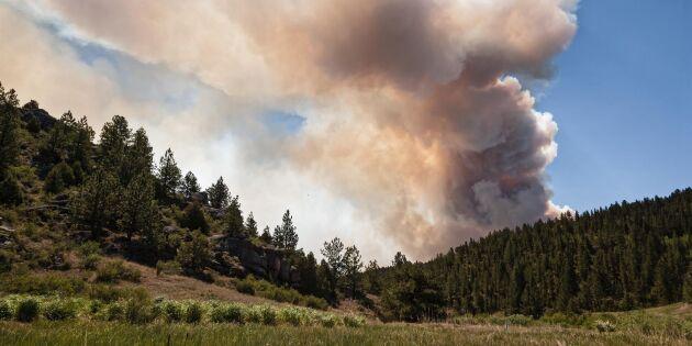 Efter skogsbrand i USA: åtalas för 141 mordbränder
