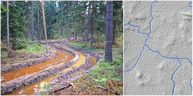 Ny karta ska minska körskador i skogen