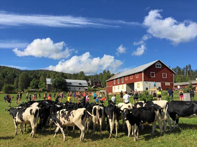 Deltagarna i ett tidigare lopp, Triathlon Ljustorp, värmer upp utanför logen med betande kor som iakttagare.