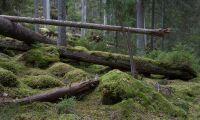 Relevant kulturdebatt om skogen