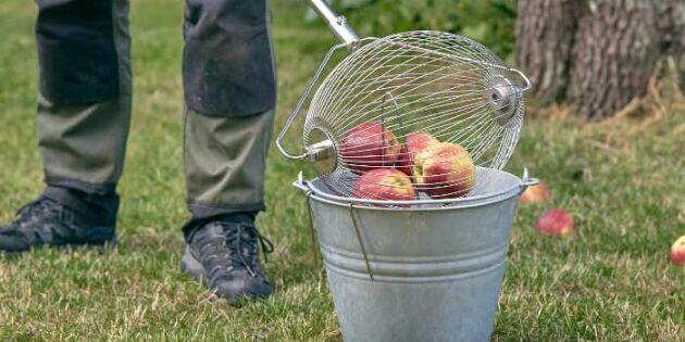 Erbjudande på äppelplockaren – smart redskap för fallfrukt