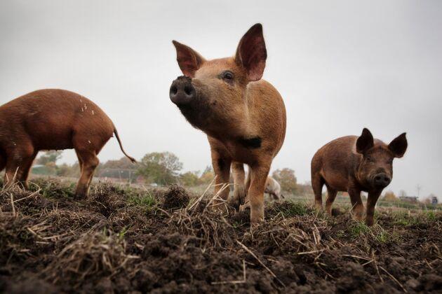 Nu blir det stopp för antibiotika till djur i onödan i hela EU.