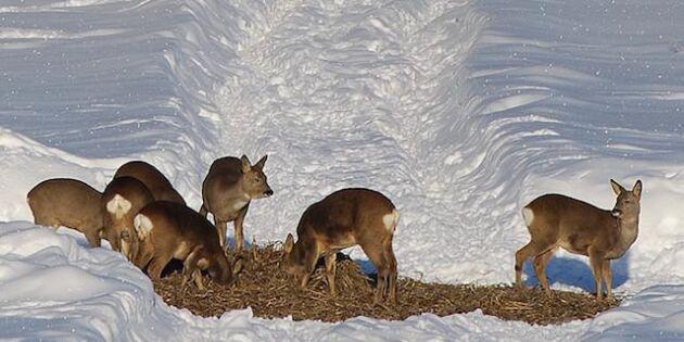 Så matar du djuren när snön ligger djup