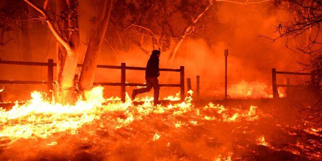 Skogsbrand rasar i södra Kalifornien