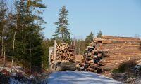 Skogsjätte sänker timmerpriserna
