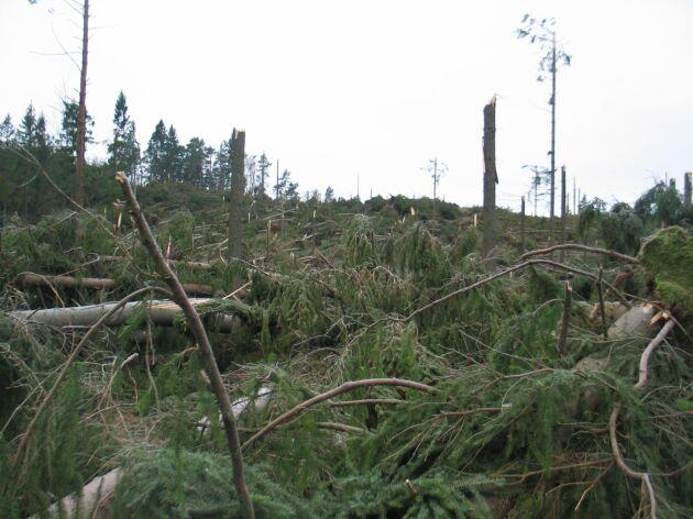 Stormen Gudrun 2005 var brutal. 75 miljoner kubikmeter skog föll i den stormen.
