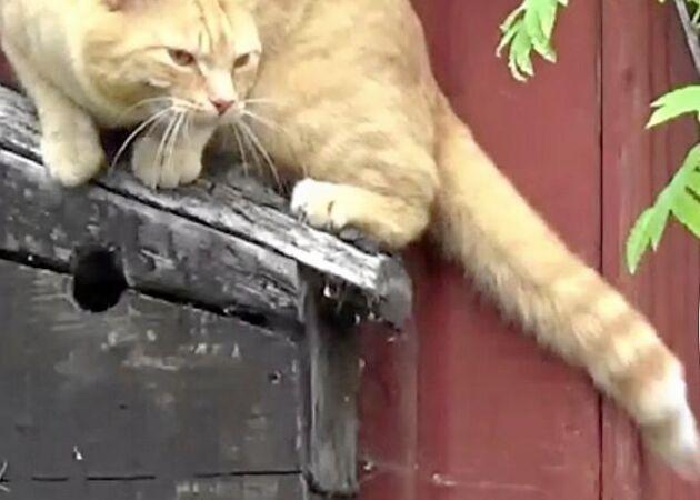 Katten Elvis jakt i fågelholken – se den dramatiska filmen