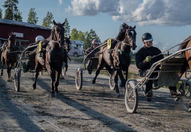 Travsporten sysselsätter flera tusen människor i Sverige. Jörgen Westholm har omkring 110 hästar i träning på sina anläggningar, här är några under ett träningslopp på gården i Sala.