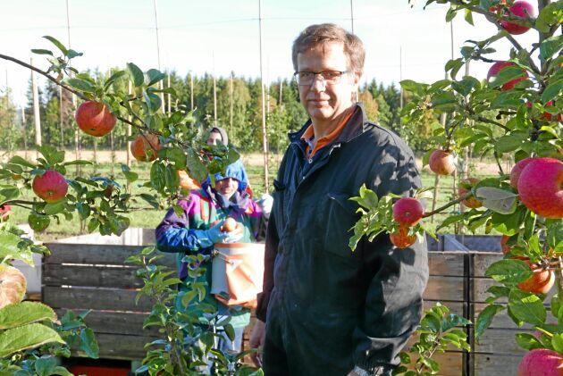 Anders Ebelin har fem anställda från Syrien under äppelplockningen. Han menar att utländsk arbetskraft är ett måste idag.