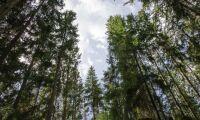"""""""Klimatångesten ska inte straffa ut landsbygden"""""""