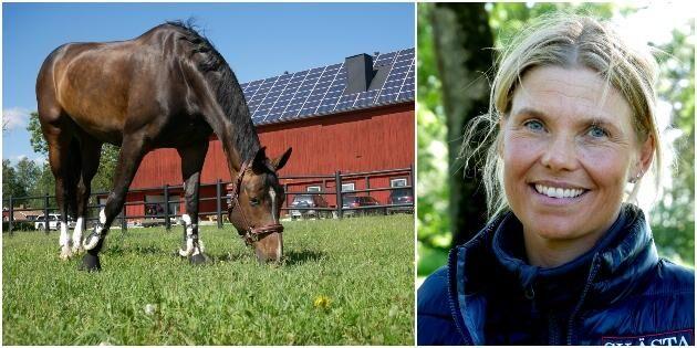 Solcellerna får hästföretaget att gå runt
