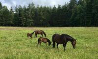 Hästföretagare får säga sitt