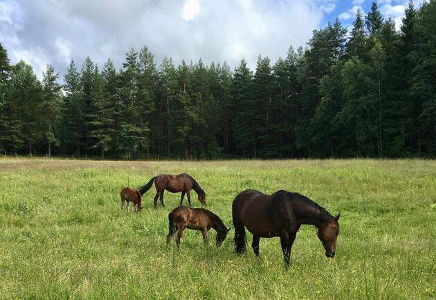 För att starta eller driva ett hästföretag som till exempel uppfödning finns många situationer där man som hästföretagare kan behöva rådgivning.