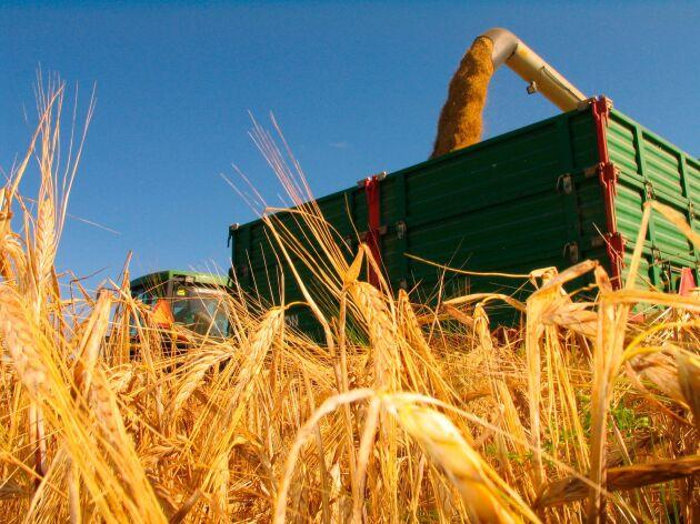 Den sämsta spannmålsskörden sedan 1959 ledde till spannmålsbrist och höga priser.
