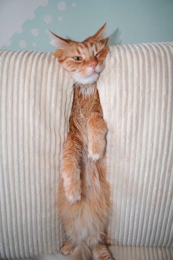 katt14