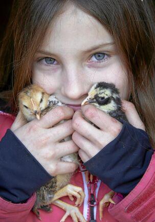Nioåriga dottern Alice gosar med två vaktelfåglar