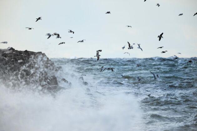 Stormen Alfrida drar fram över Gotland.