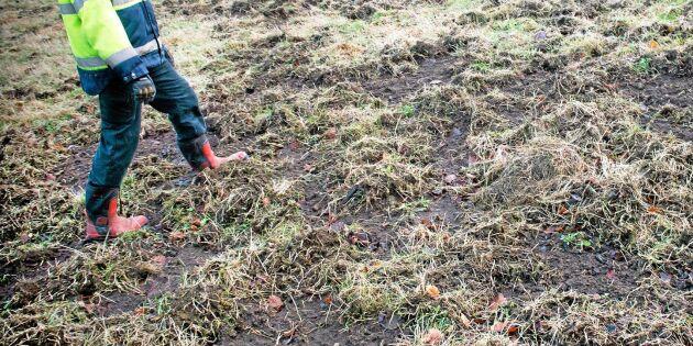 Vildsvinen ska inte påverka lantbruket