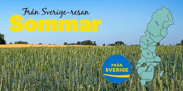 Från Sverige-resan: Supersmaker i Sommarsverige