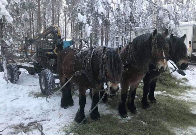 Hästarna tar sig fram i de flesta marker och väder.